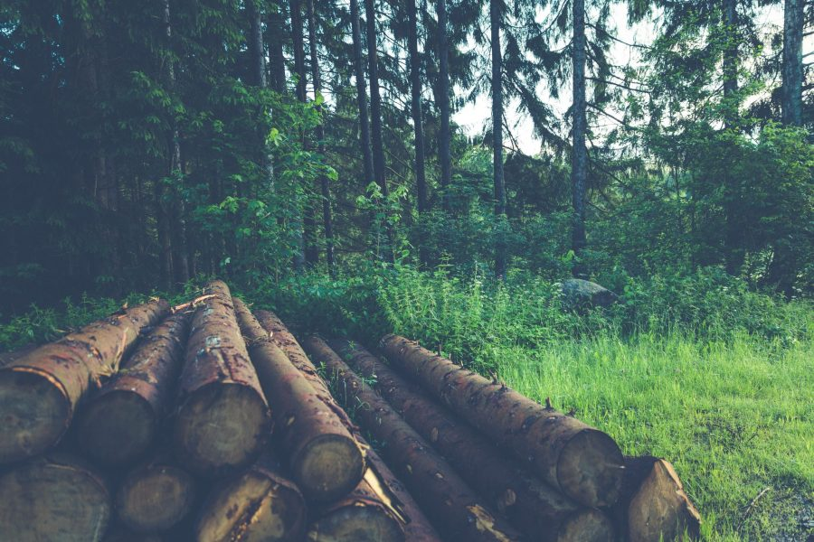 Salvage logging has proven to be an unsustainable practice. Is it time to return to the basics? #PrimroseCreations #lovethelifeyoulive #ecology