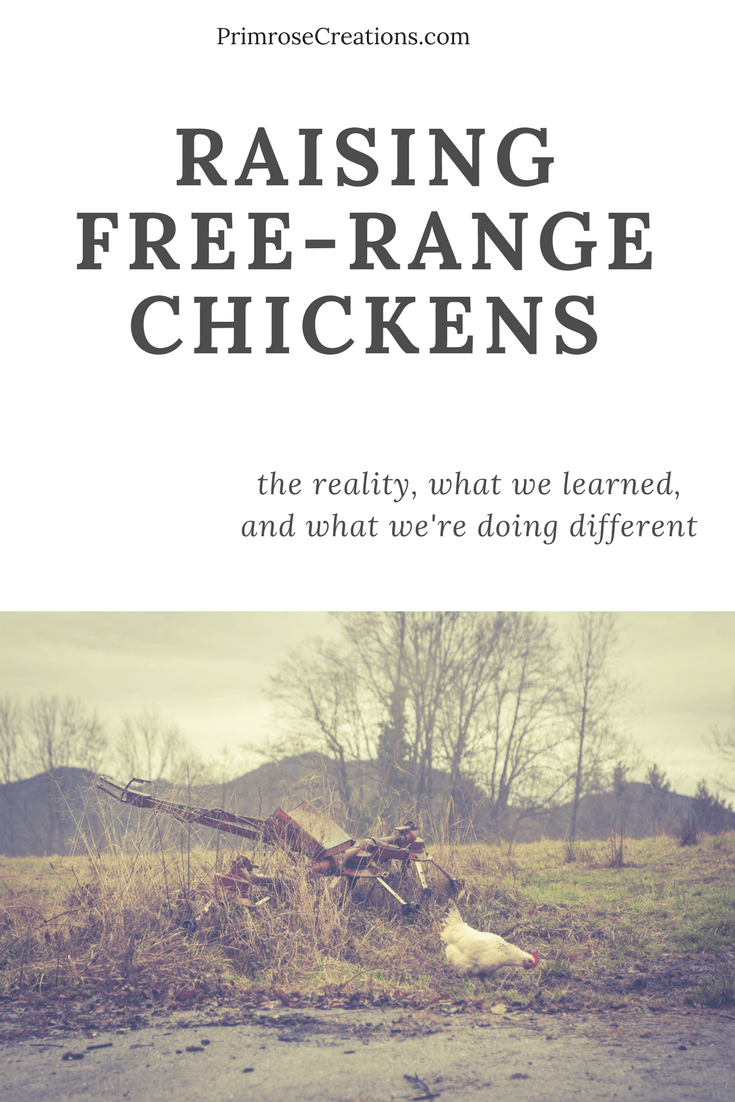 A tragedy turned into a lesson on chicken safety #PrimroseCreations #lovethelifeyoulive #chickens
