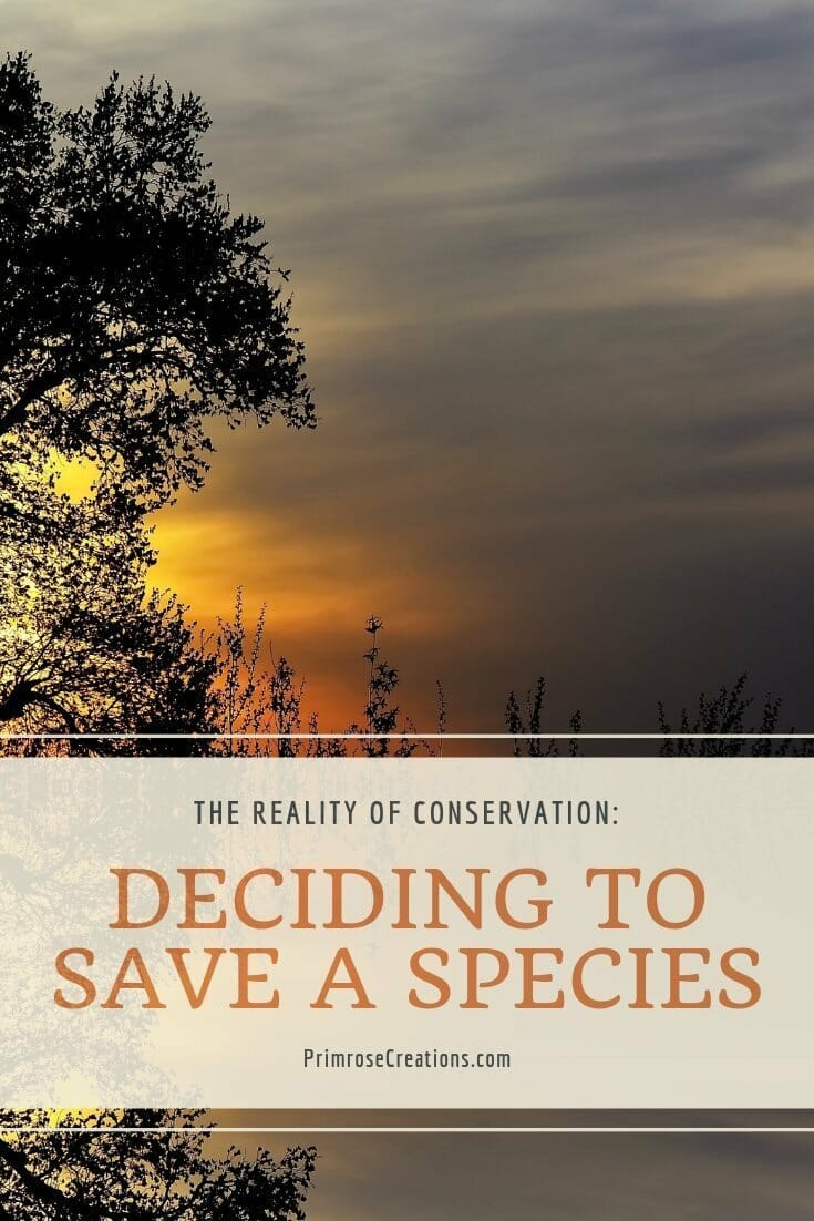 The reality of conservation: deciding whether to save or ignore endangered species  #PrimroseCreations #conservation #hunting #recreation #endangeredspecies