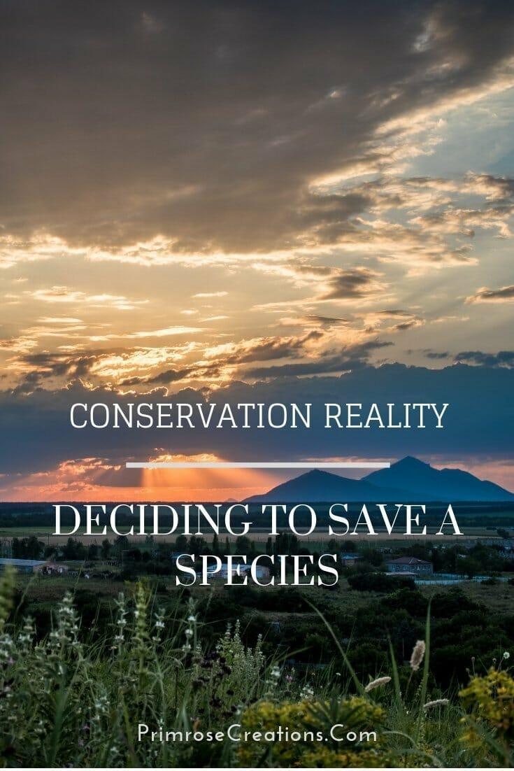 With conservation funding in decline, researchers have begun studying its impact. Deciding to save a species from extinction has become reality. #PrimroseCreations #ovethelifeyoulive #conservation #wildlife #endangered #endangeredspecies #environmenat #biodiversity