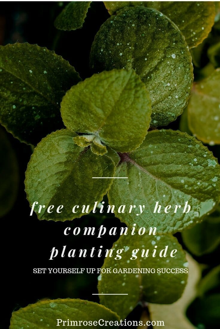 Set yourself up for gardening success with this FREE Culinary Herb Companion Planting Guide #PrimroseCreations #lovethelifeyoulive #herbs #homegrown #growyourownfood