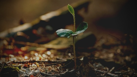 How much organic matter is needed for healthy soils? Carbon plays an important role in sustainable agriculture, just how important is it? Researchers from Yale and the Nature Conservancy sought out to find the answer!