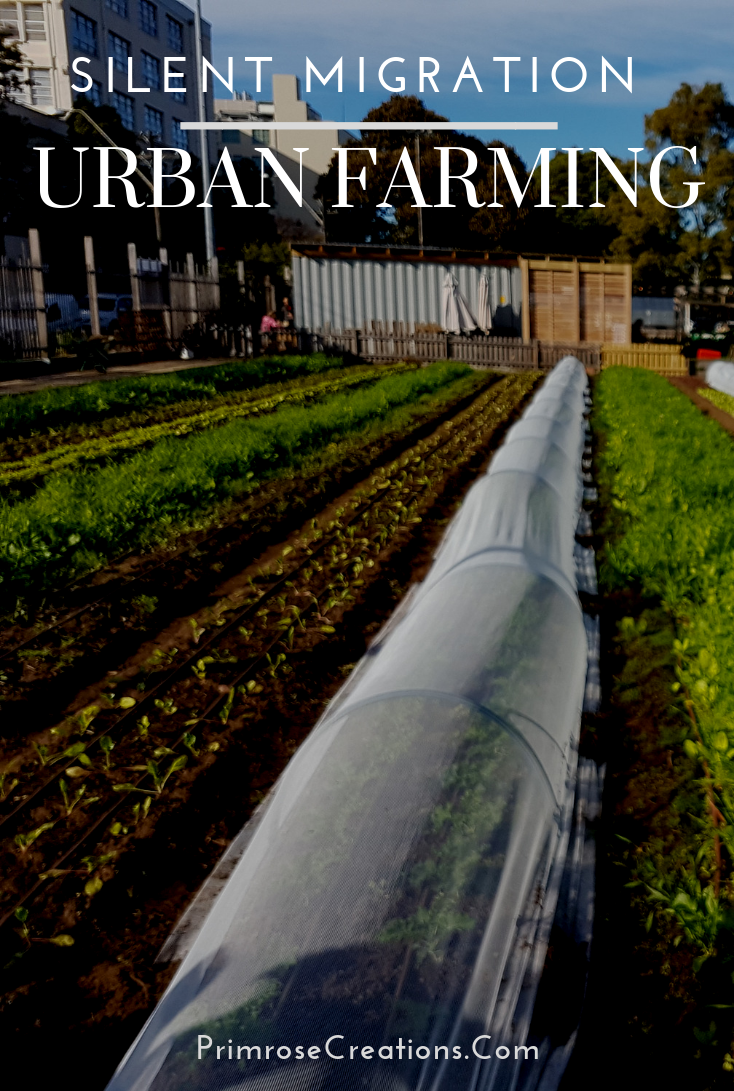 New studies find that urban farms are facing increasing competition from nonprofits but are succeeding through community support.  #PrimroseCreations #LoveTheLifeYouLive #Science #Economics #Education #Urban Farming #Community #Support #Youth #EarthFever