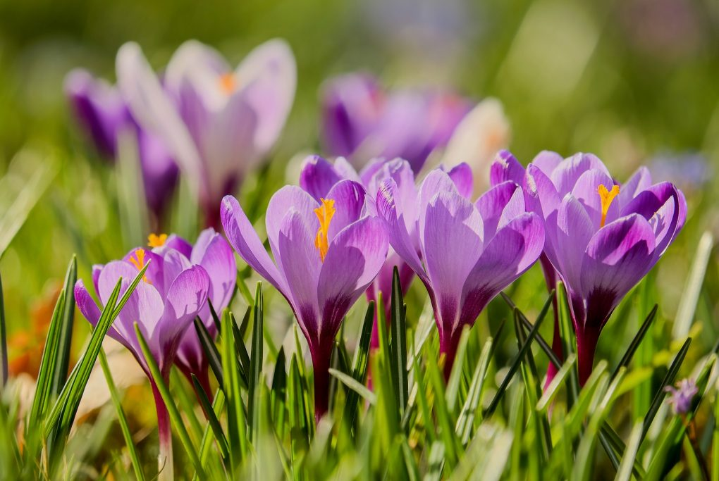 As April comes and goes, colors in our surroundings come to life. Flowers in bloom during the month of May announce springs arrival. Read more to see what's blooming now!
