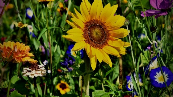 Plant these flowers in May for a vibrant annual cutting garden. Get fast color without a huge investment.