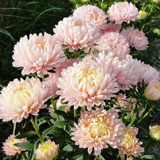 Just when you think summer is over, fall flowers have a different story to tell. Get the most from your fall cutting garden by planting these varieties.