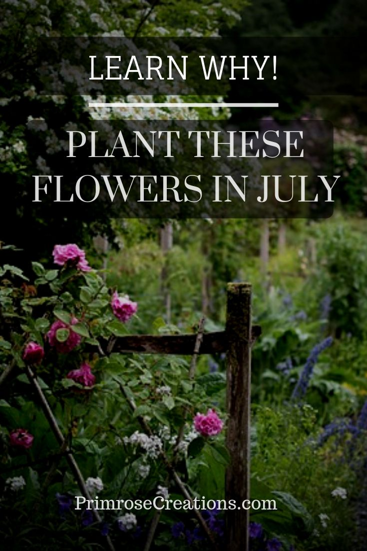 The end of June is often considered the end of the planting season. Knowing what flowers to plant in July can take your landscape to another level!