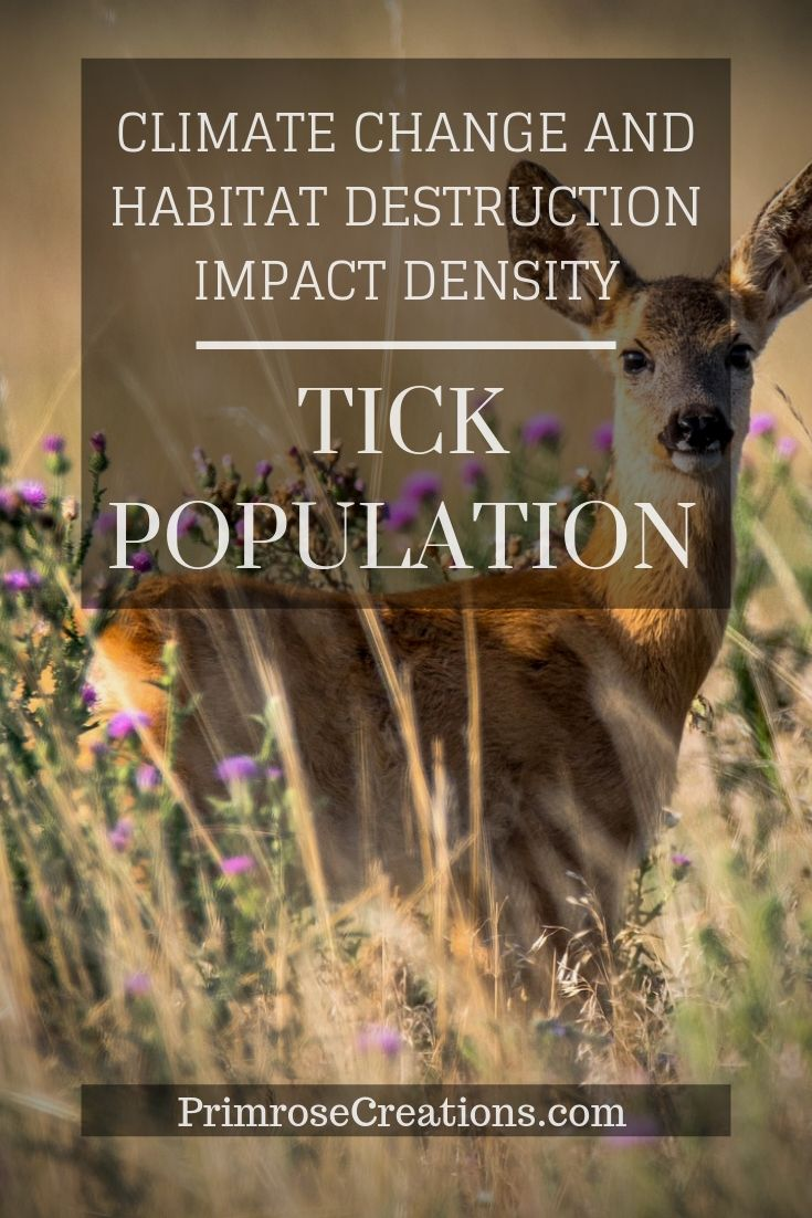 As ecosystems begin to change due to climate and human interference, tick species within them tend to experience a shift in distribution. The significance of this finding could change how ecosystem functions are interpreted.