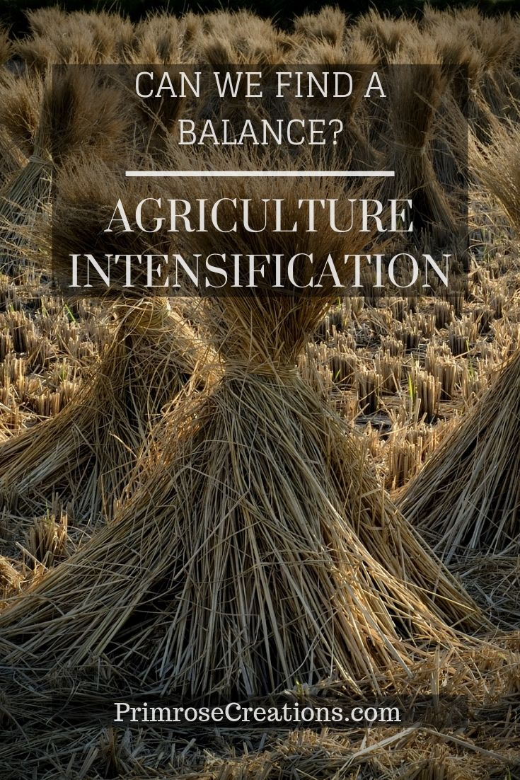 Can we intensify agriculture and still find a balance with the environment?