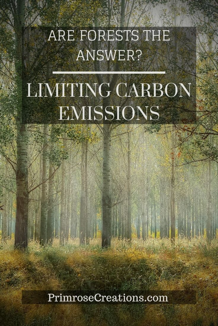 Are forests the answer for limiting carbon emissions? That depends on who you ask! Studies of agroforestry and commercial tree plantations aim to find the answer.