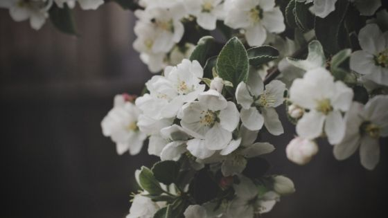 Floriculture has existed on a world scale but has gained momentum in popularity in recent years. Here are 10 fun facts about the floriculture industry!
