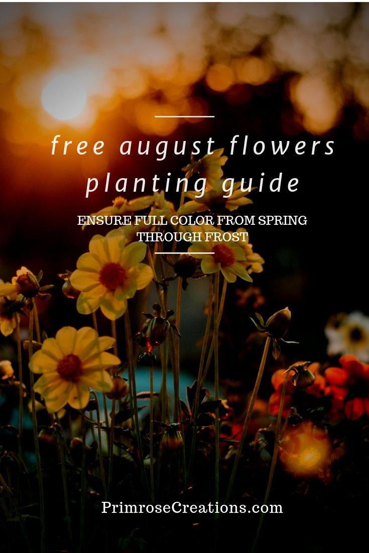 Free guide to the best flowers to plant in August to give you growing success for years to come.