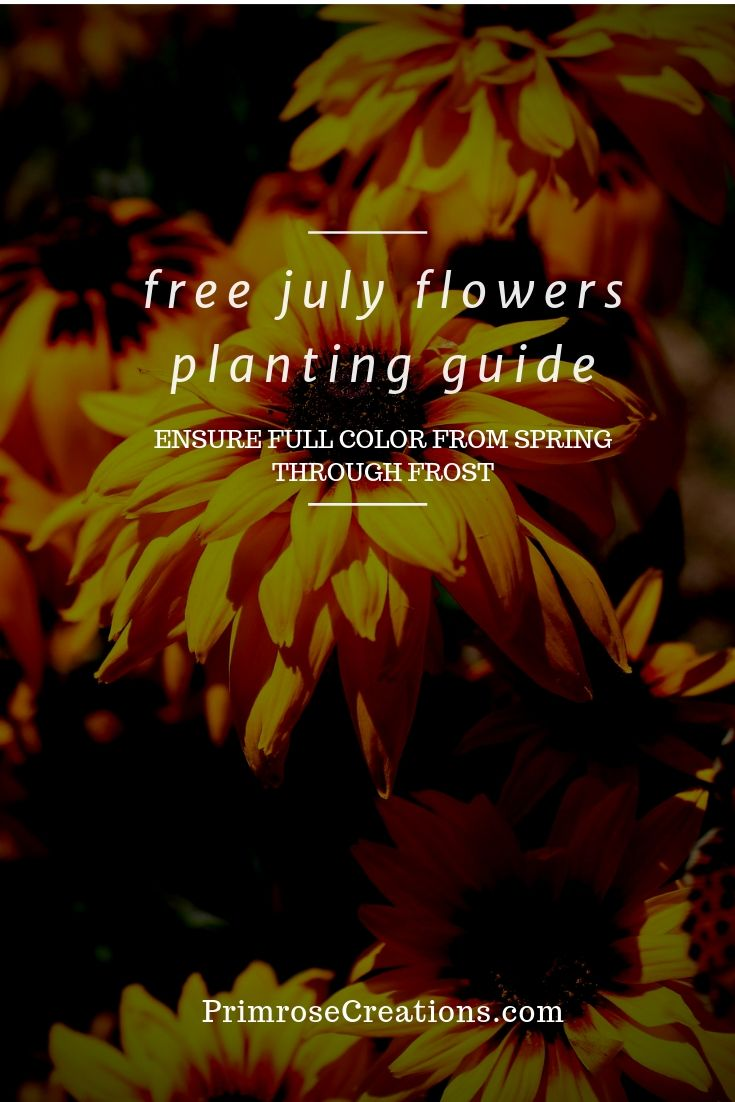 Free guide to the best flowers plant in July to give you growing success for years to come.