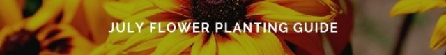 guide of flowers to plant in July