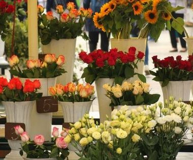 Each year, the cut flower industry in the United States produces billions of dollars in revenue. Can the cut flower industry keep up with demand?