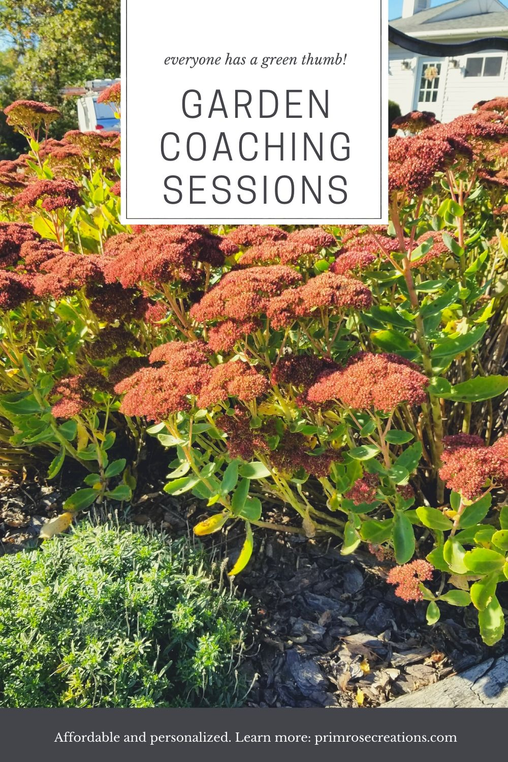 Garden coaching by Primrose Creations is conducted in the Amsterdam, NY area and include services such as in-person garden lessons and greenhouse visits.