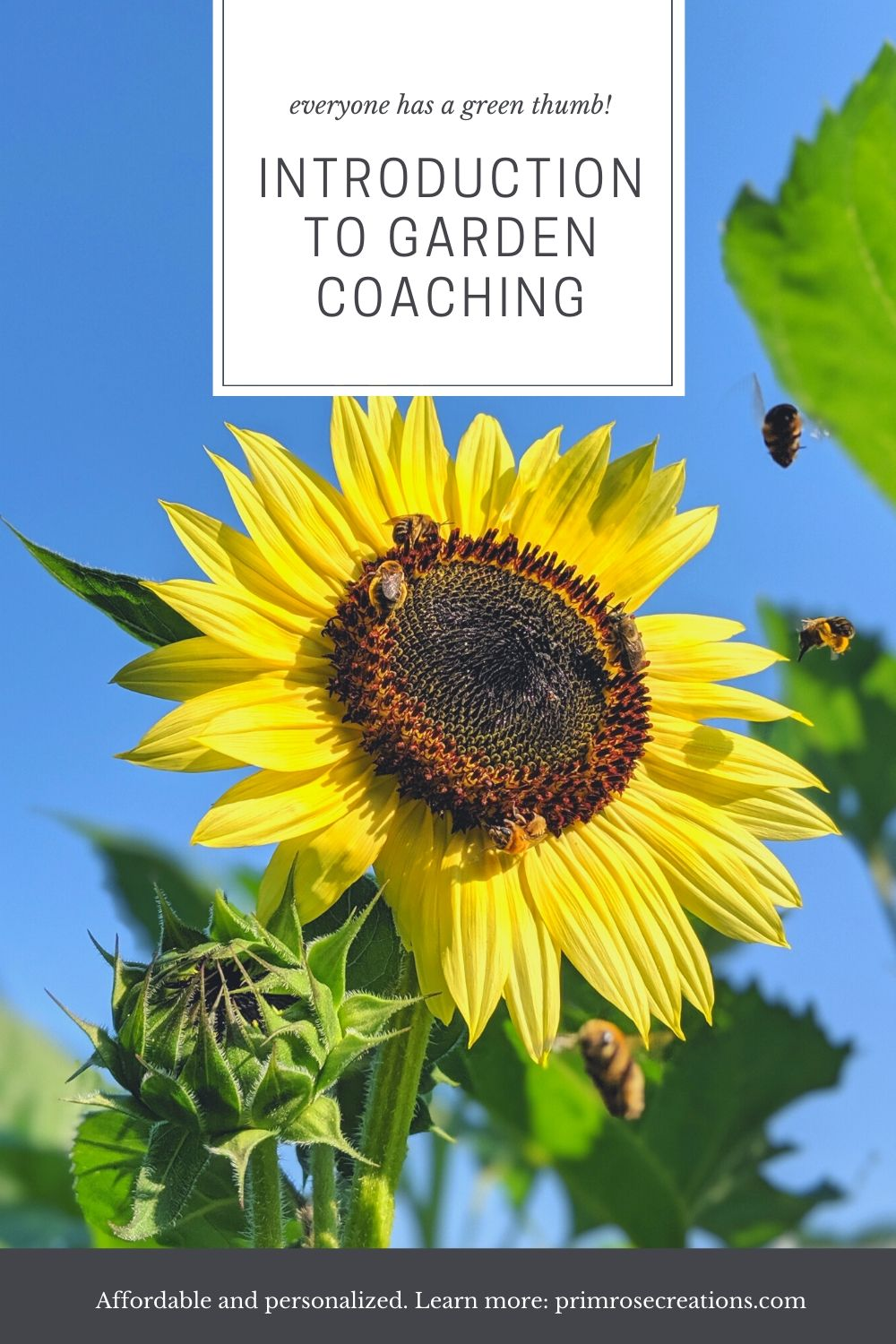 Christina Malinoski is a garden coach from the Amsterdam, NY area. Read her bio and experience and learn what a garden coach can do for you.